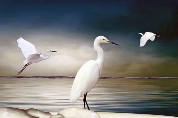 ibises-1791984_640