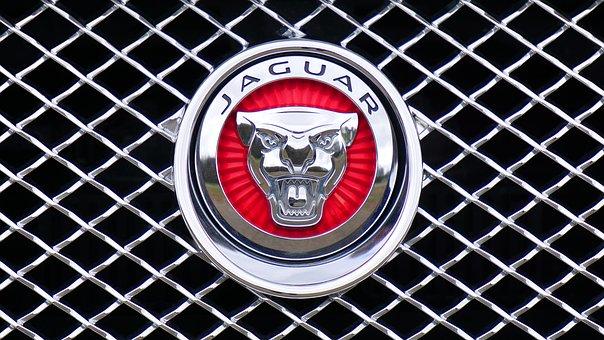 jaguar-1660955__340