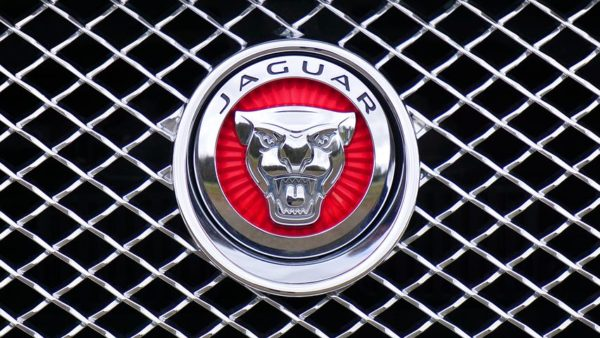 jaguar-1660955__480