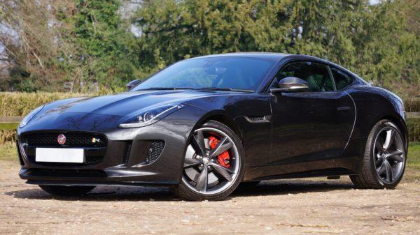 jaguar-1256555_1920
