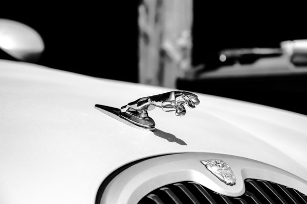 jaguar-1544031_1920