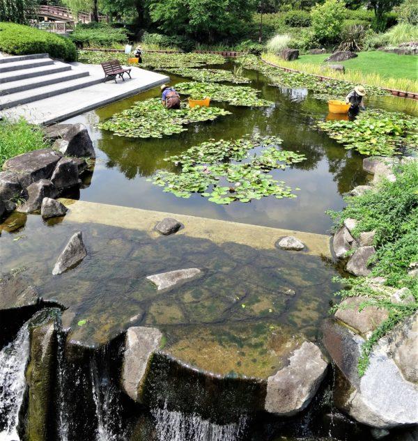 水生植物公園みすの森