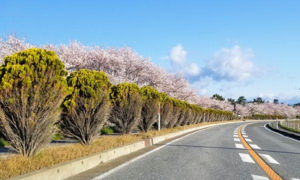 琵琶湖の湖岸道路